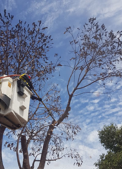 tree pruning adelaide
